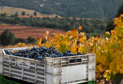 04-vina-las-ninas-vineyard-grapes-case-DSC_0716