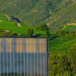 10-vina-las-ninas-winery-vineyard