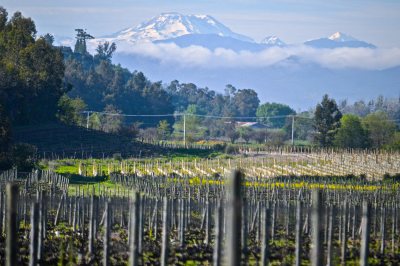 11-vina-las-ninas-vineyard-mountains-DSC0015