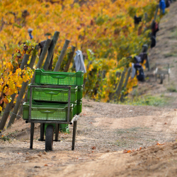 12-vina-las-ninas-vineyard-cases-way-DSC_0733