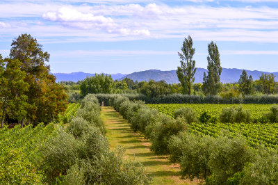 13-vina-las-ninas-plantation-property-DSC_0415