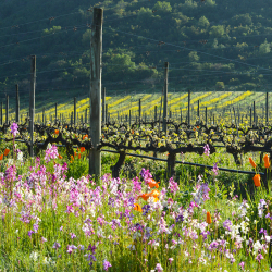 15-vina-las-ninas-terroir-vineyard-flowers-DSC1009
