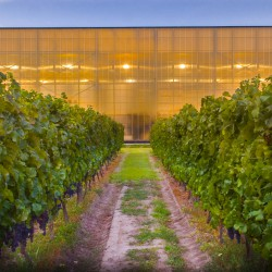 vina-las-ninas-winery-exterior-01