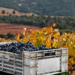 04-vina-las-ninas-vineyard-grapes-case-DSC_0716