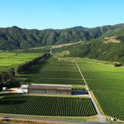 07-vina-las-ninas-vineyrard-from-the-sky-intro01