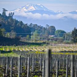 11-vina-las-ninas-vineyard-mountains-DSC0015